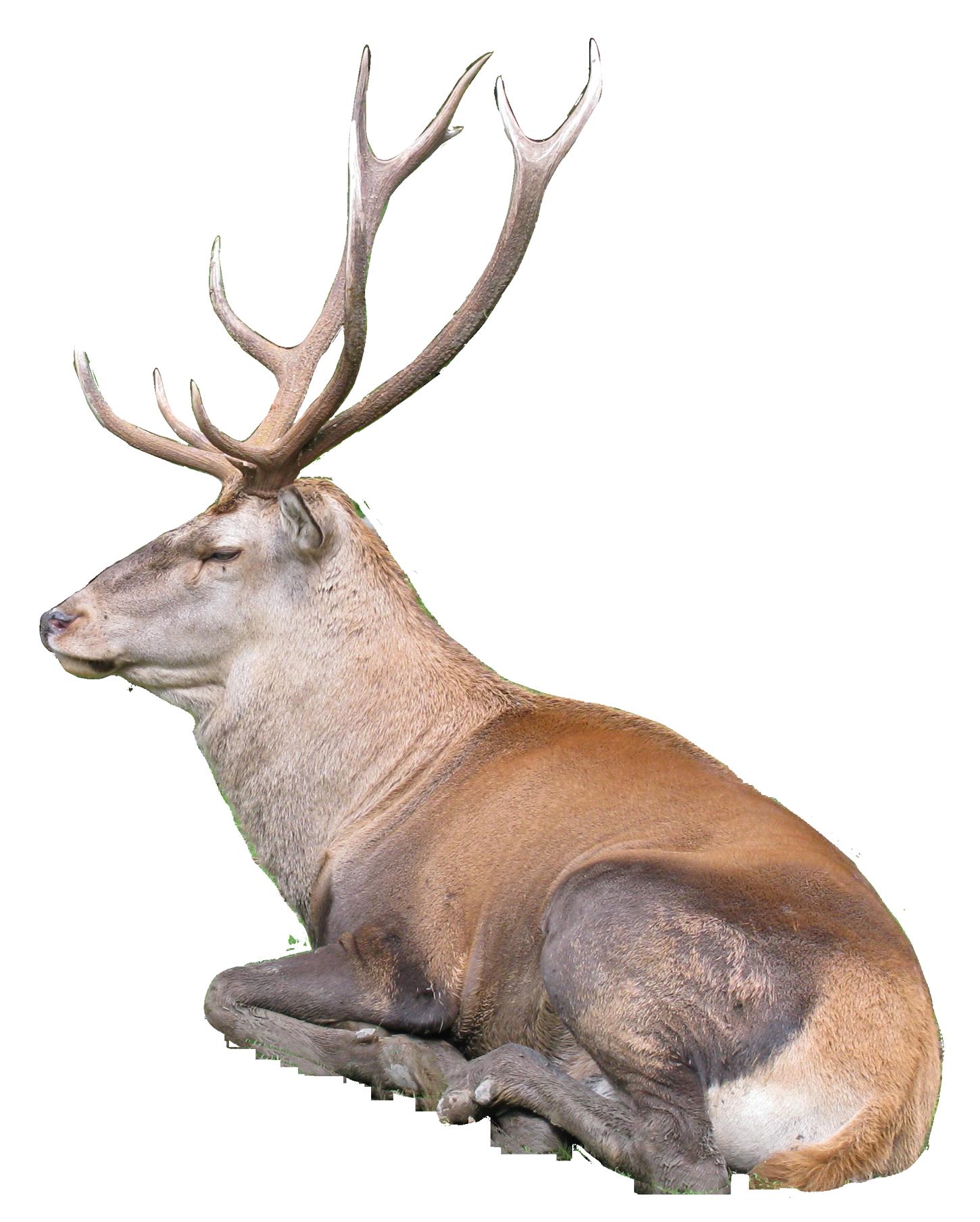 Hdpng - Reindeer, Transparent background PNG HD thumbnail