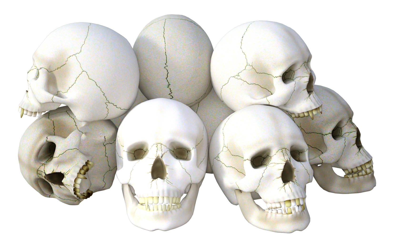Hdpng - Skeleton Head, Transparent background PNG HD thumbnail