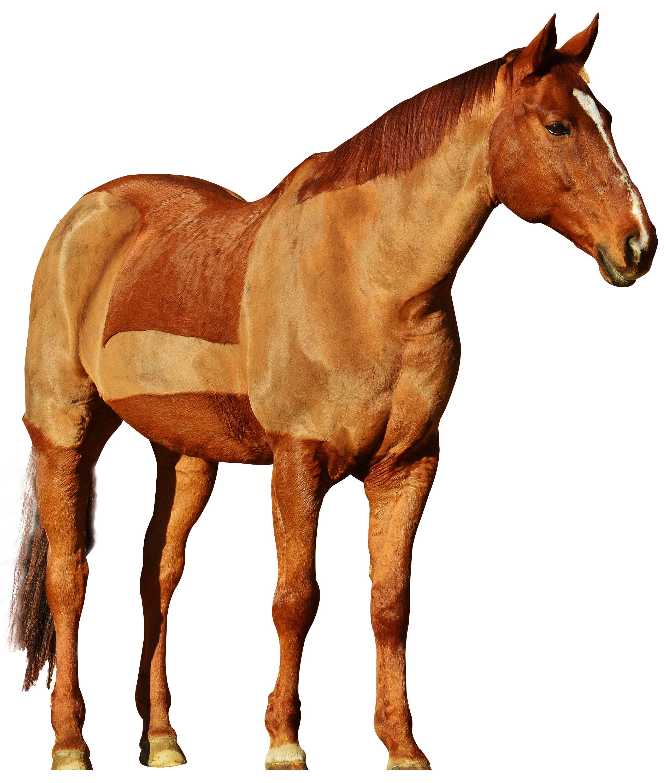 Hdpng - Horse, Transparent background PNG HD thumbnail