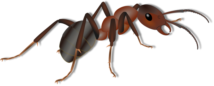 Hdpng - Ant, Transparent background PNG HD thumbnail