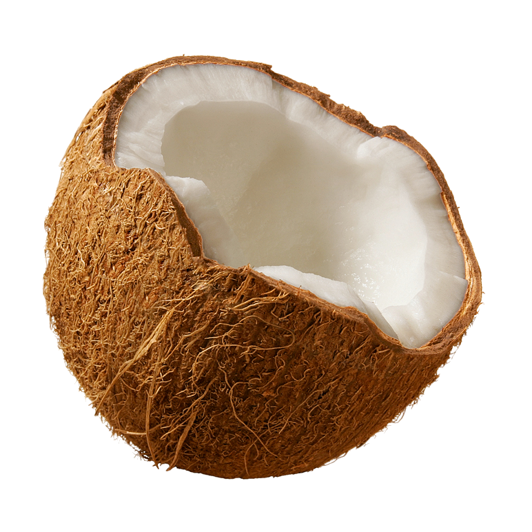 Hdpng - Coconut, Transparent background PNG HD thumbnail