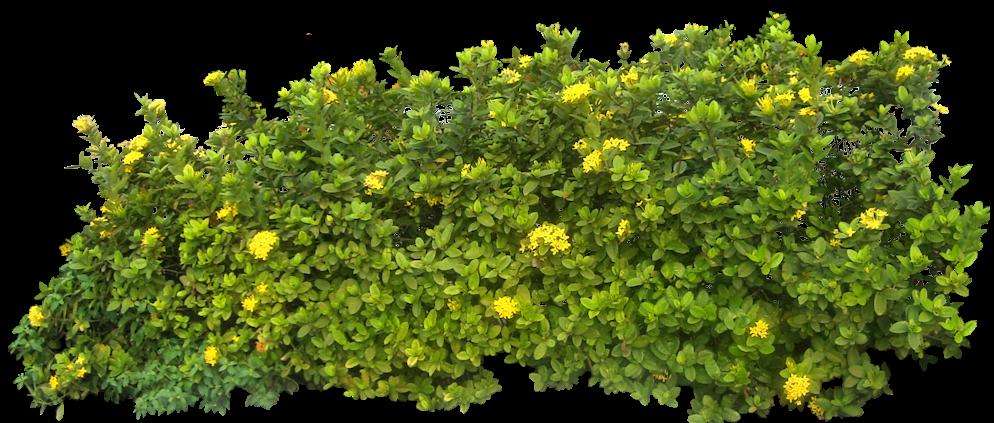 Hdpng - Shrub Bushes, Transparent background PNG HD thumbnail