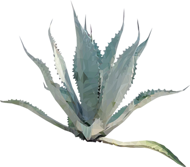 Agave Plant Sticker - Agave, Transparent background PNG HD thumbnail