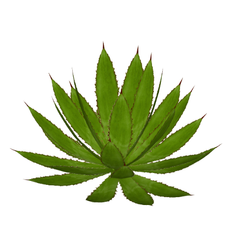 File:cow Horns Agave (Felipe).png - Agave, Transparent background PNG HD thumbnail