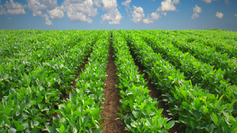 Province Allocates K7M For Agriculture - Agriculture, Transparent background PNG HD thumbnail