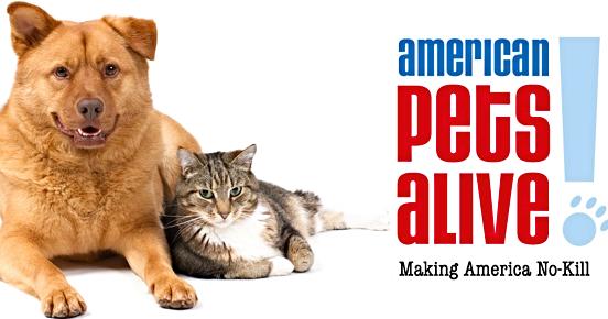 American Pets Png Hdpng.com 552 - American Pets, Transparent background PNG HD thumbnail