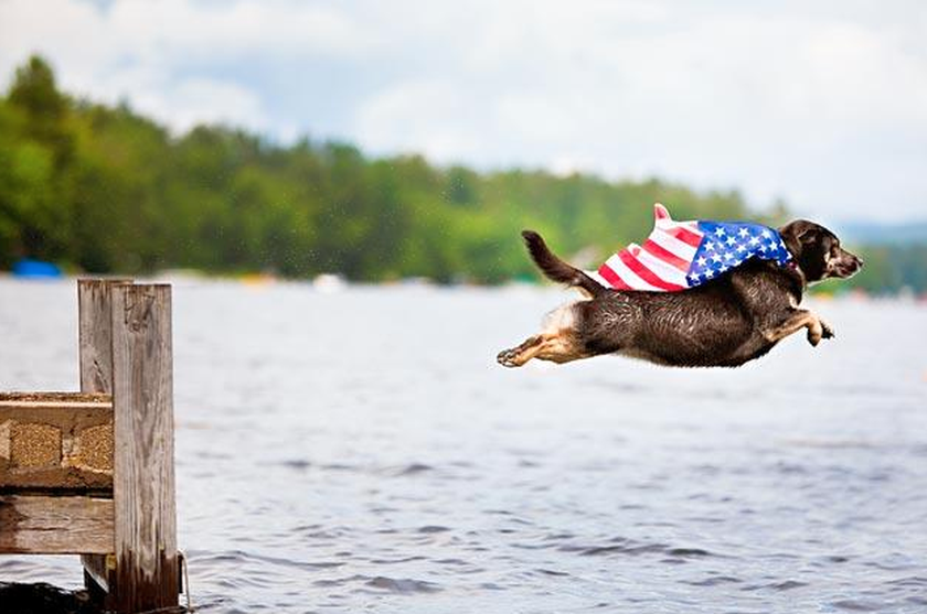 . Hdpng.com Dog Leaping Wearing A Flag Hdpng.com  - American Pets, Transparent background PNG HD thumbnail