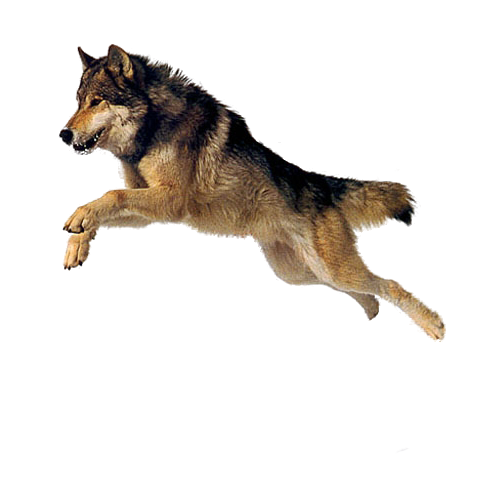 Dog Png By Camelfobia - American Pets, Transparent background PNG HD thumbnail