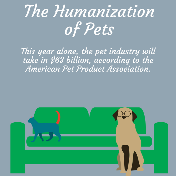 Hot Trend: The Humanization Of Pets - American Pets, Transparent background PNG HD thumbnail