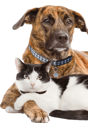Shelter Search - American Pets, Transparent background PNG HD thumbnail