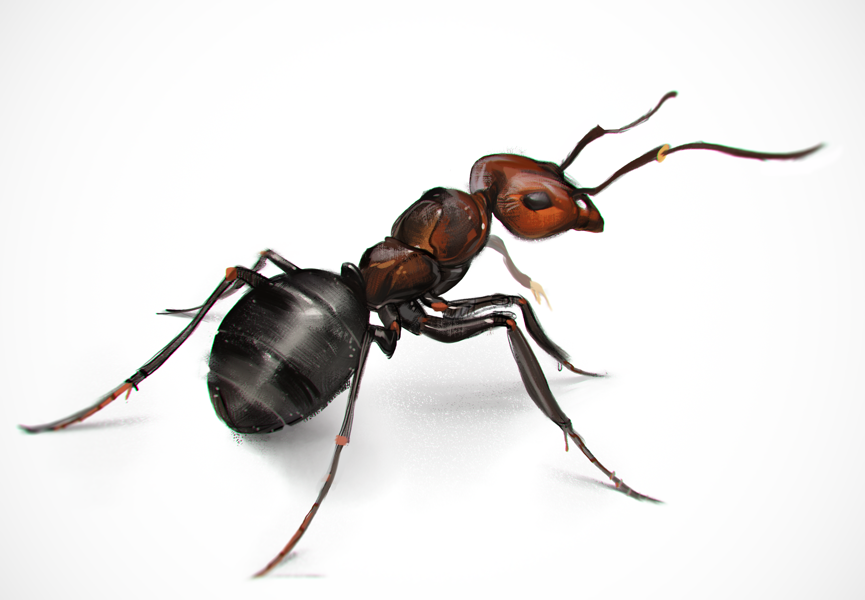 An Ant Study! Woop! - Ant, Transparent background PNG HD thumbnail