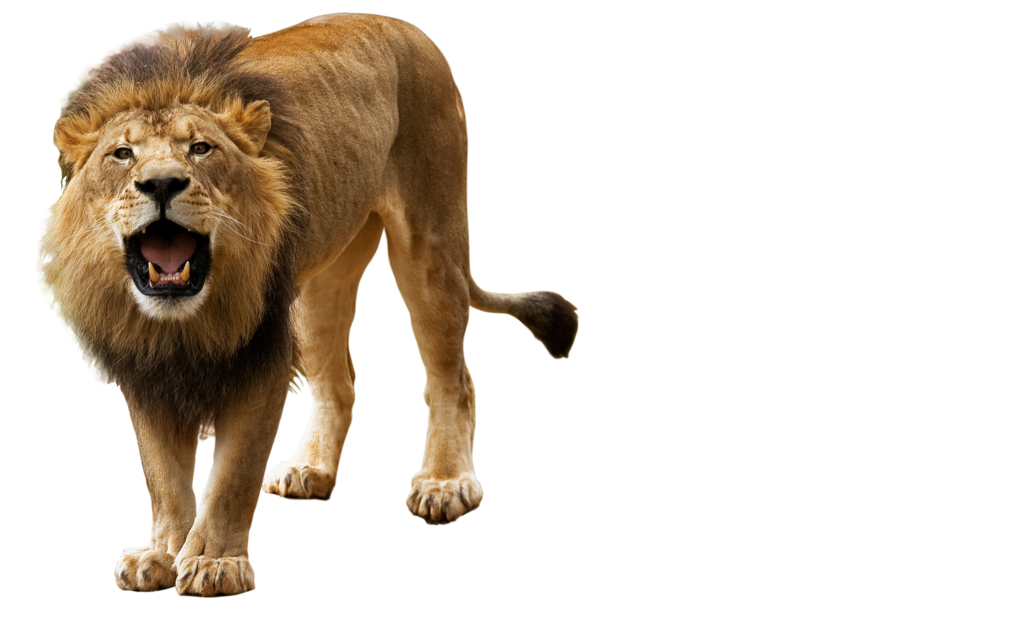 Angry Lion PNG HD