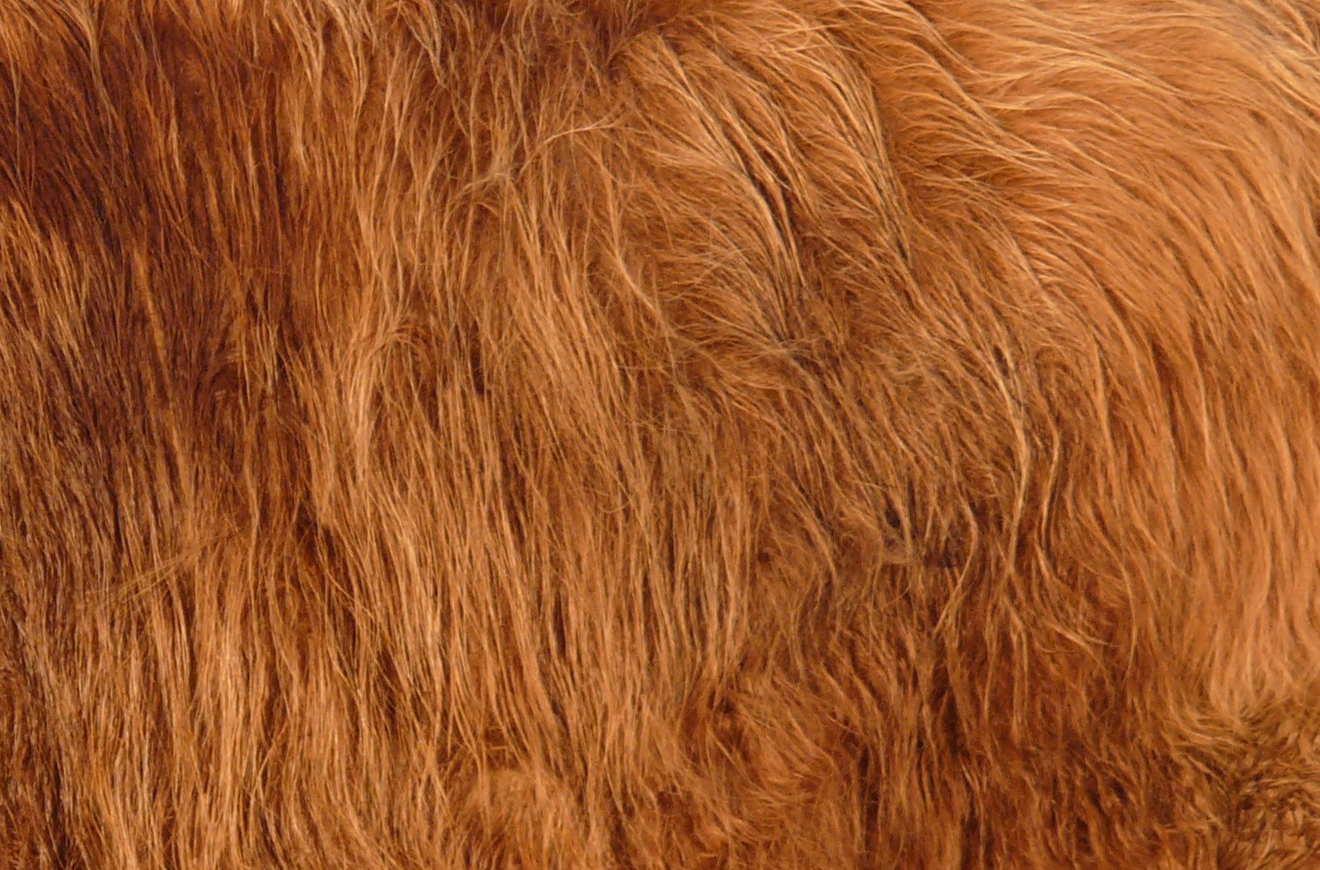 About Us Hdpng.com  - Animal Fur, Transparent background PNG HD thumbnail