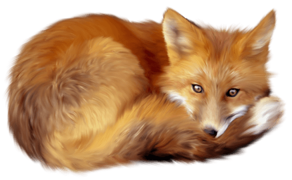 Animals · Foxes - Animal Fur, Transparent background PNG HD thumbnail