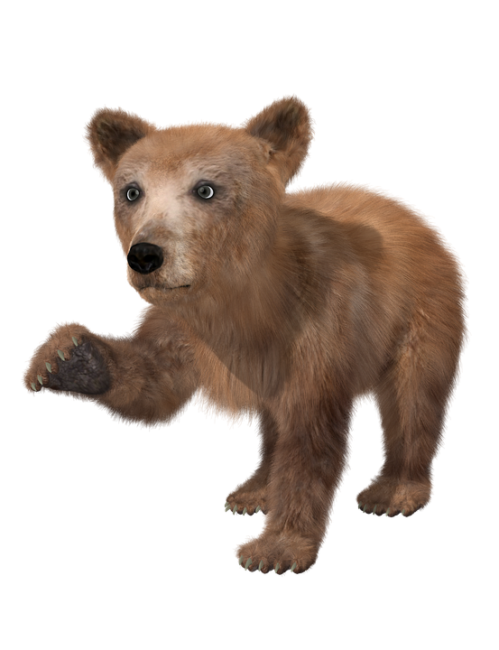 Bear Brown Bear Young Toon Teddy Fur Wild Animal - Animal Fur, Transparent background PNG HD thumbnail