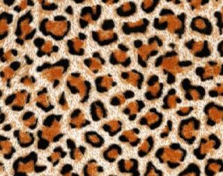 Cheetah Fur - Animal Fur, Transparent background PNG HD thumbnail