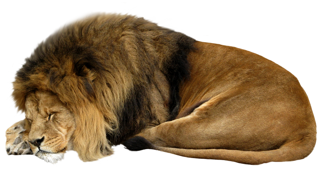 Cut Out Stock Png 13   Sleeping Lion - Animal Fur, Transparent background PNG HD thumbnail