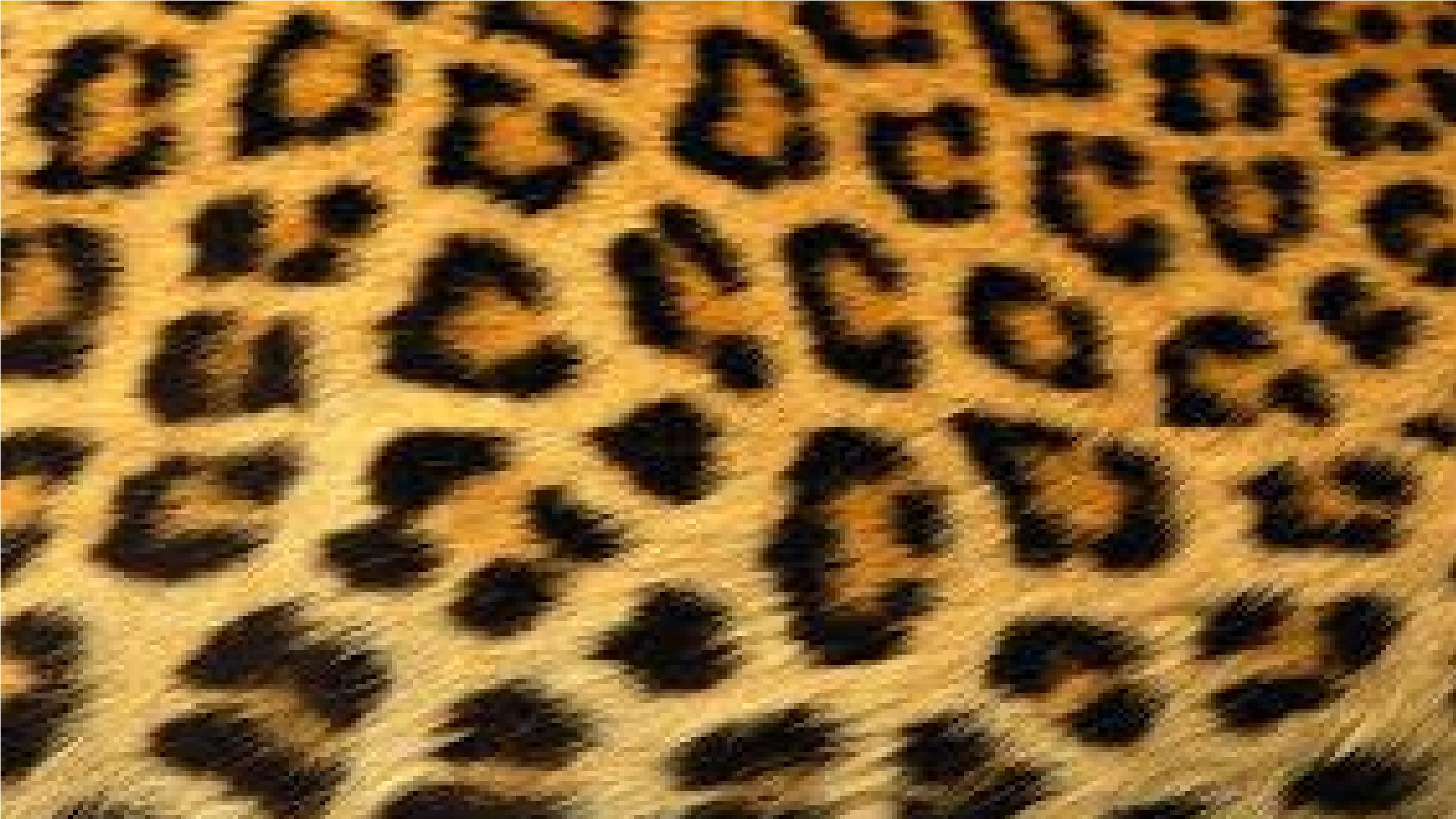Large Cheetah Fur Wallpaper   Cheetah Wallpaper (37801731)   Fanpop - Animal Fur, Transparent background PNG HD thumbnail