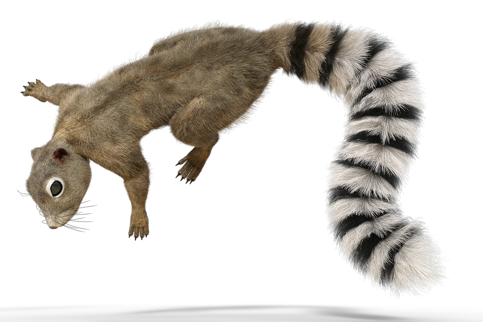 Squirrel Tail Animal Forest Fur Nature Cute - Animal Fur, Transparent background PNG HD thumbnail