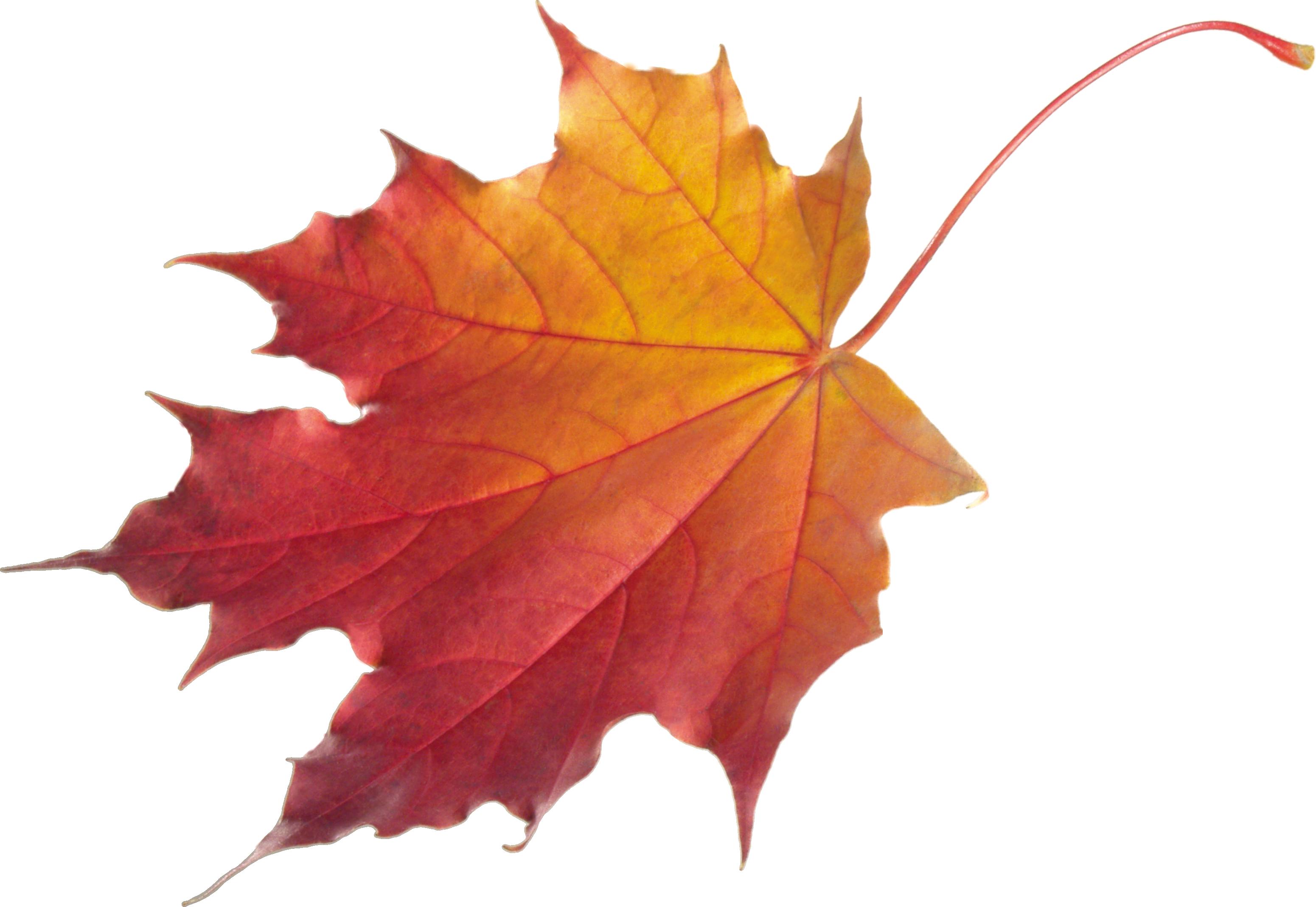 Autumn Leaves Hd Png - Autumn Leaves Hd Png Hdpng.com 3101, Transparent background PNG HD thumbnail