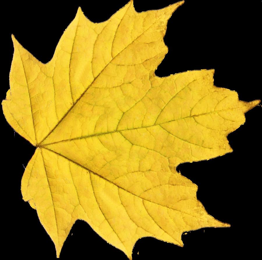 Autumn Leaves Hd Png - Autumn Leaves Hd Png Hdpng.com 900, Transparent background PNG HD thumbnail