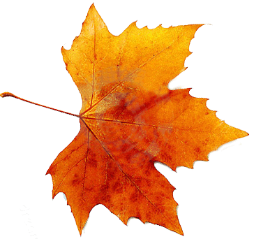 Autumn Leaves Hd Png - Autumn Png By Vanessarebelangel Hdpng.com , Transparent background PNG HD thumbnail