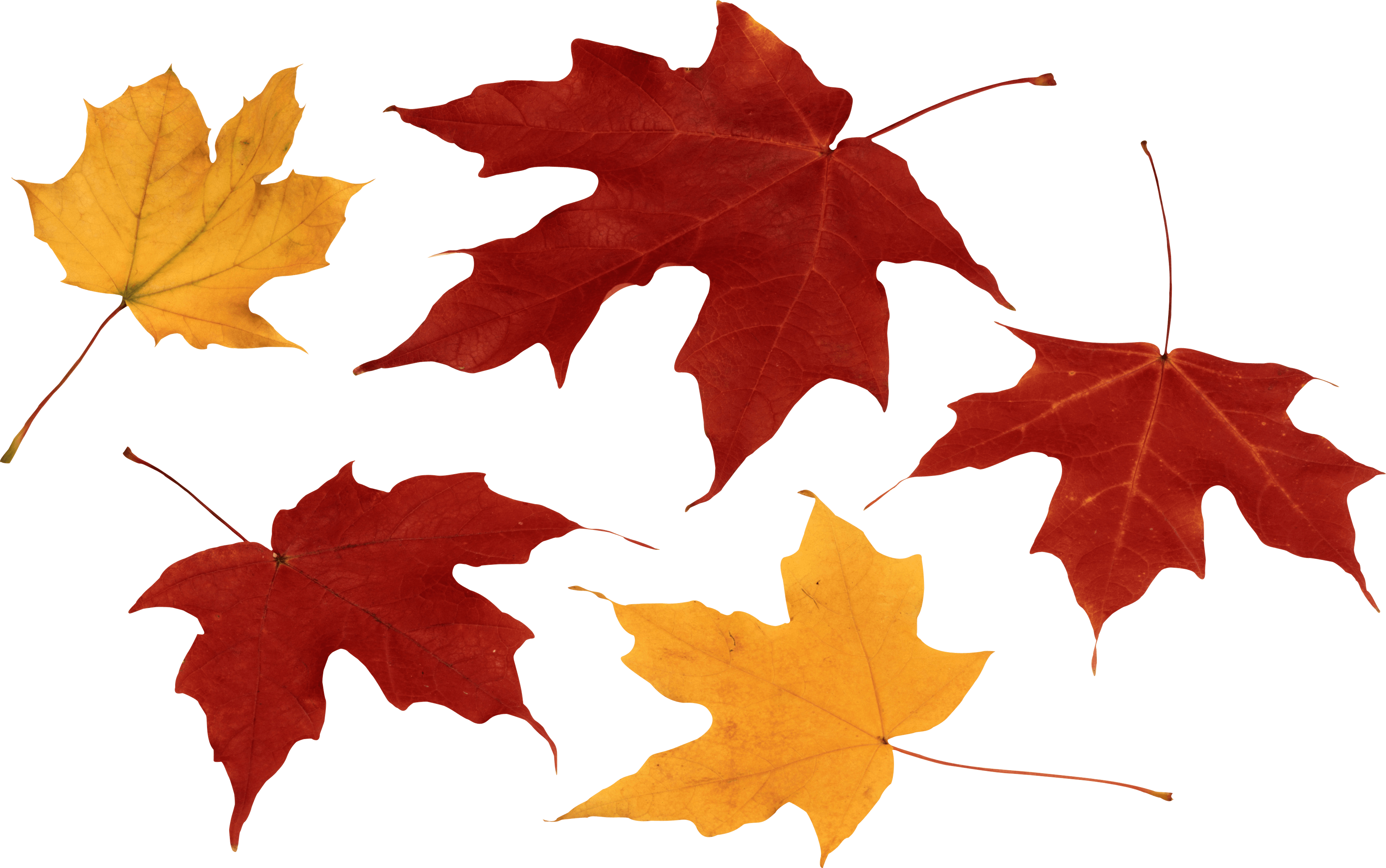 Autumn Leaves Hd Png - Autumn Png Leaf Png Image, Transparent background PNG HD thumbnail