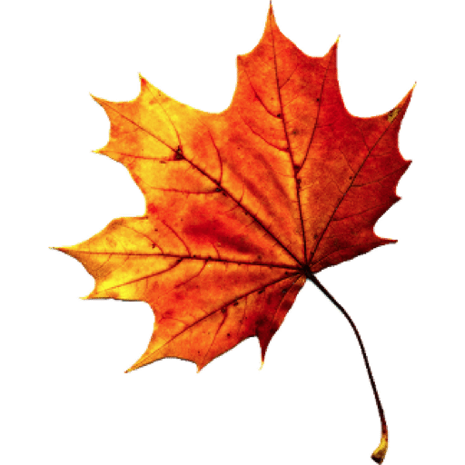 Autumn Leaves Hd Png - Fall Autumn Leaves Transparent Png, Transparent background PNG HD thumbnail
