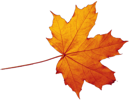 Autumn Leaves Hd Png - Transparent Autumn Leaves Falling Png, Transparent background PNG HD thumbnail