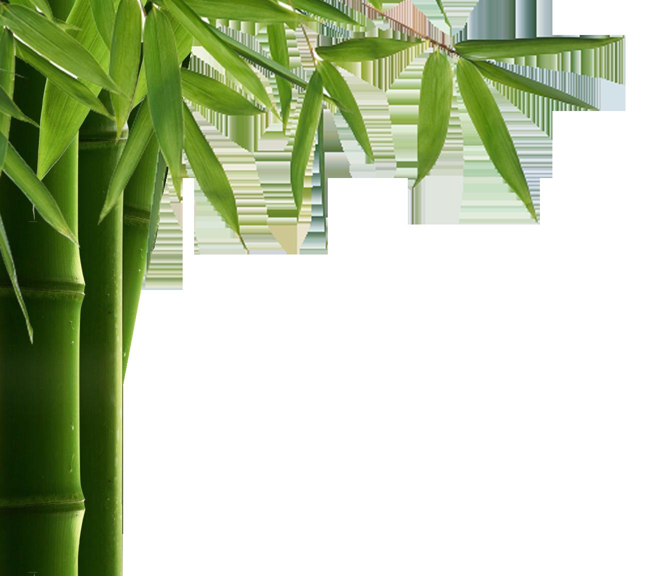 Bamboo PNG HD
