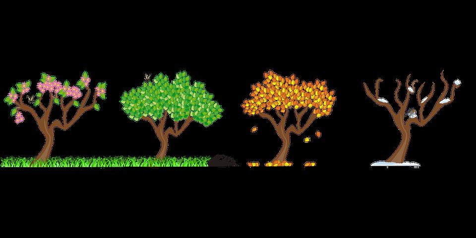 Baum Jahreszeiten PNG