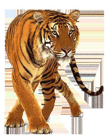 Big Cat Png - Cat, Transparent background PNG HD thumbnail