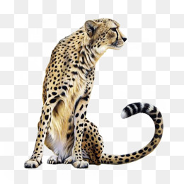 Big Cat Png - Leopard Spots, Animal, Panther, Big Cat Png Image And Clipart, Transparent background PNG HD thumbnail