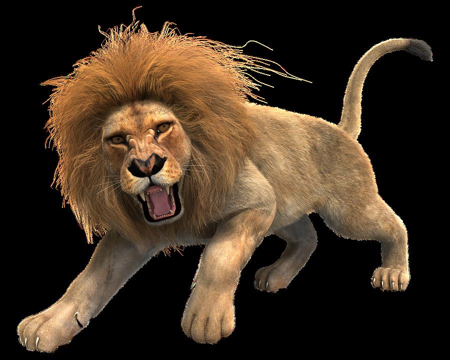 Big Cat Png - Lion Male Mane Predator Cat Big Cat Wildcat King, Transparent background PNG HD thumbnail
