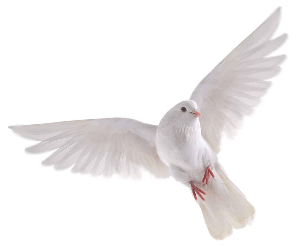 Bird HD PNG