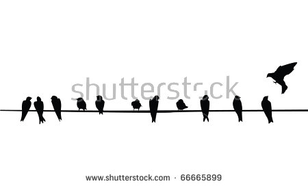 A Silhouette Of Birds (Purple Martins) On A Telephone Wire. - Birds On A Wire, Transparent background PNG HD thumbnail