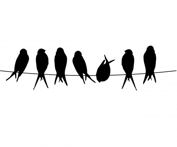 Bird On A Wire | Birds On A Wire By Karen Arnold - Birds On A Wire, Transparent background PNG HD thumbnail