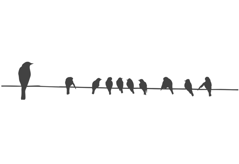 Birds On A Wire Wall Decal - Birds On A Wire, Transparent background PNG HD thumbnail