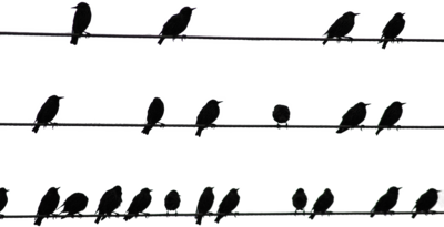 Birds On Wire Psd - Birds On A Wire, Transparent background PNG HD thumbnail
