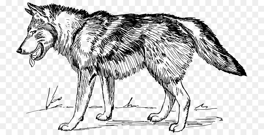 Arctic Wolf Black Wolf Clip Art   Sketch Wolf - Black And White Wolf, Transparent background PNG HD thumbnail