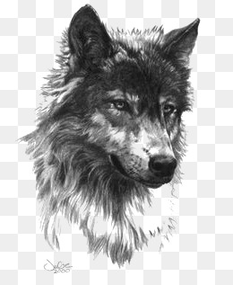 Gray Wolf, Painted Gray Wolf, Cartoon Gray Wolf, Wolf Png Image And Clipart - Black And White Wolf, Transparent background PNG HD thumbnail