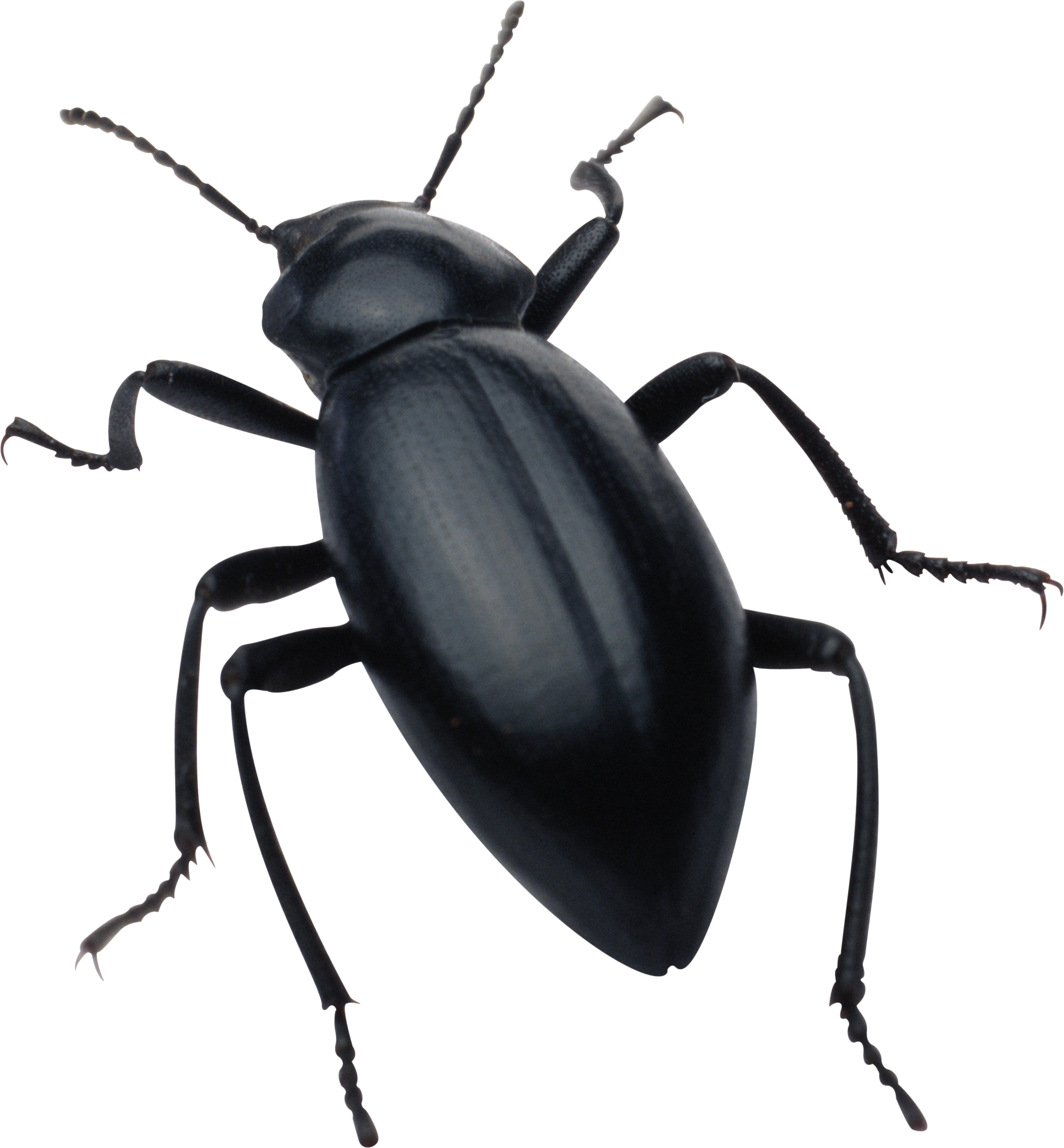 Black Bug Png Image - Bugs, Transparent background PNG HD thumbnail