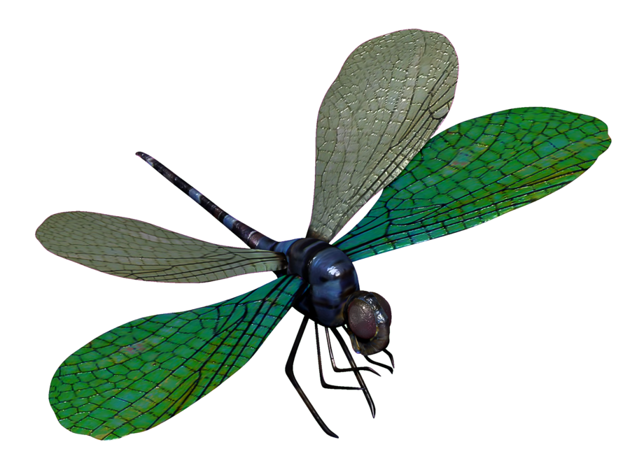 Blue Dragonfly 3D Model By Toysoldierthor Hdpng.com  - Dragonfly, Transparent background PNG HD thumbnail