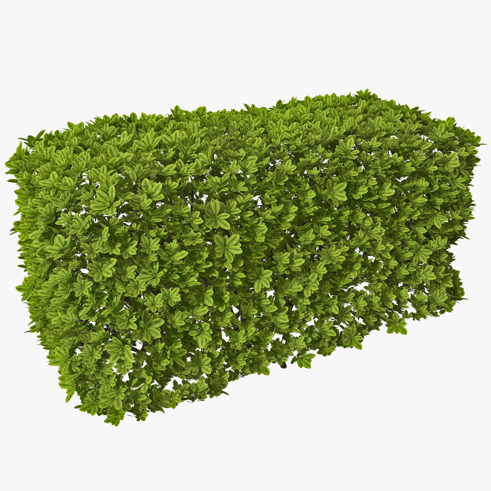 Boxes Plant Png   Google Search - Shrub Bushes, Transparent background PNG HD thumbnail
