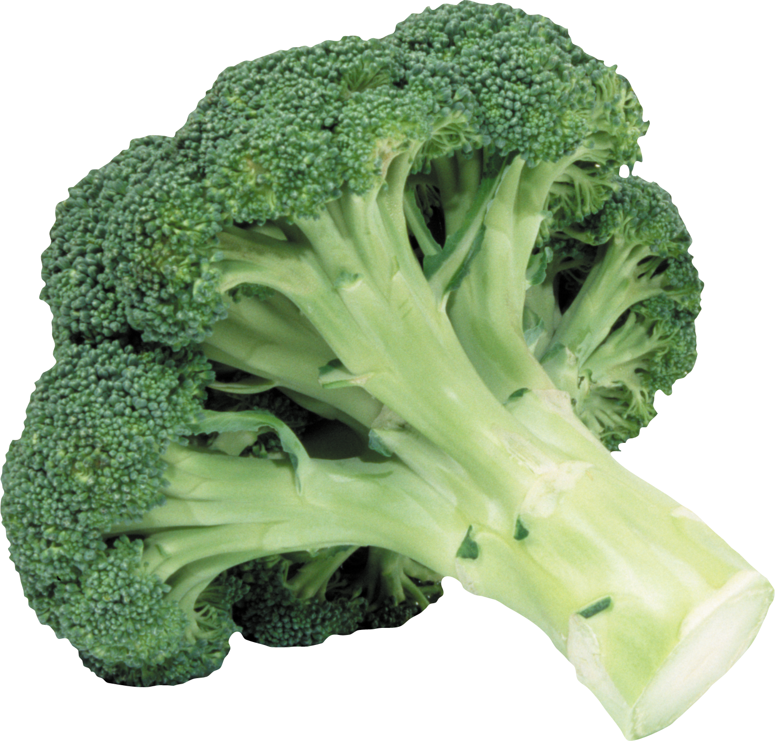 Broccoli Png Image - Broccoli, Transparent background PNG HD thumbnail