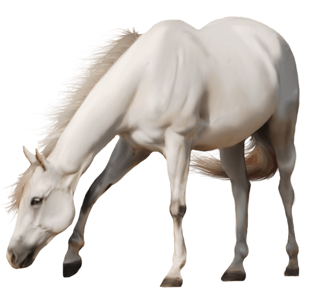 Brown Horse Png Image Download Picture Transparent Background Png Image - Horse, Transparent background PNG HD thumbnail
