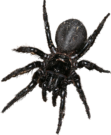Bug 059.png - Bugs, Transparent background PNG HD thumbnail