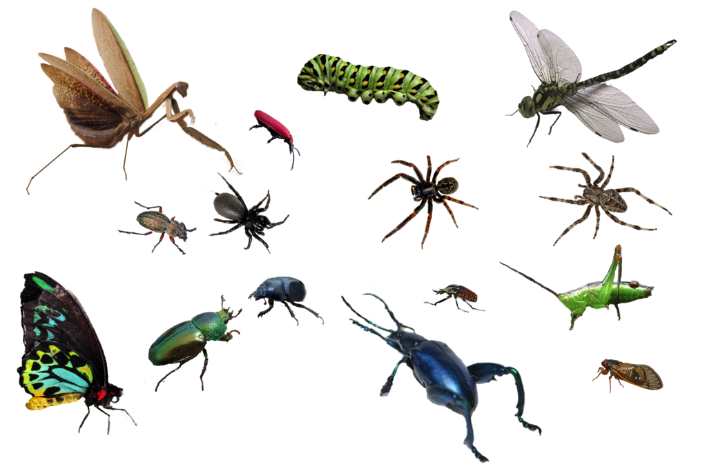 Bug By Mariasemelevich Hdpng.com  - Bugs, Transparent background PNG HD thumbnail