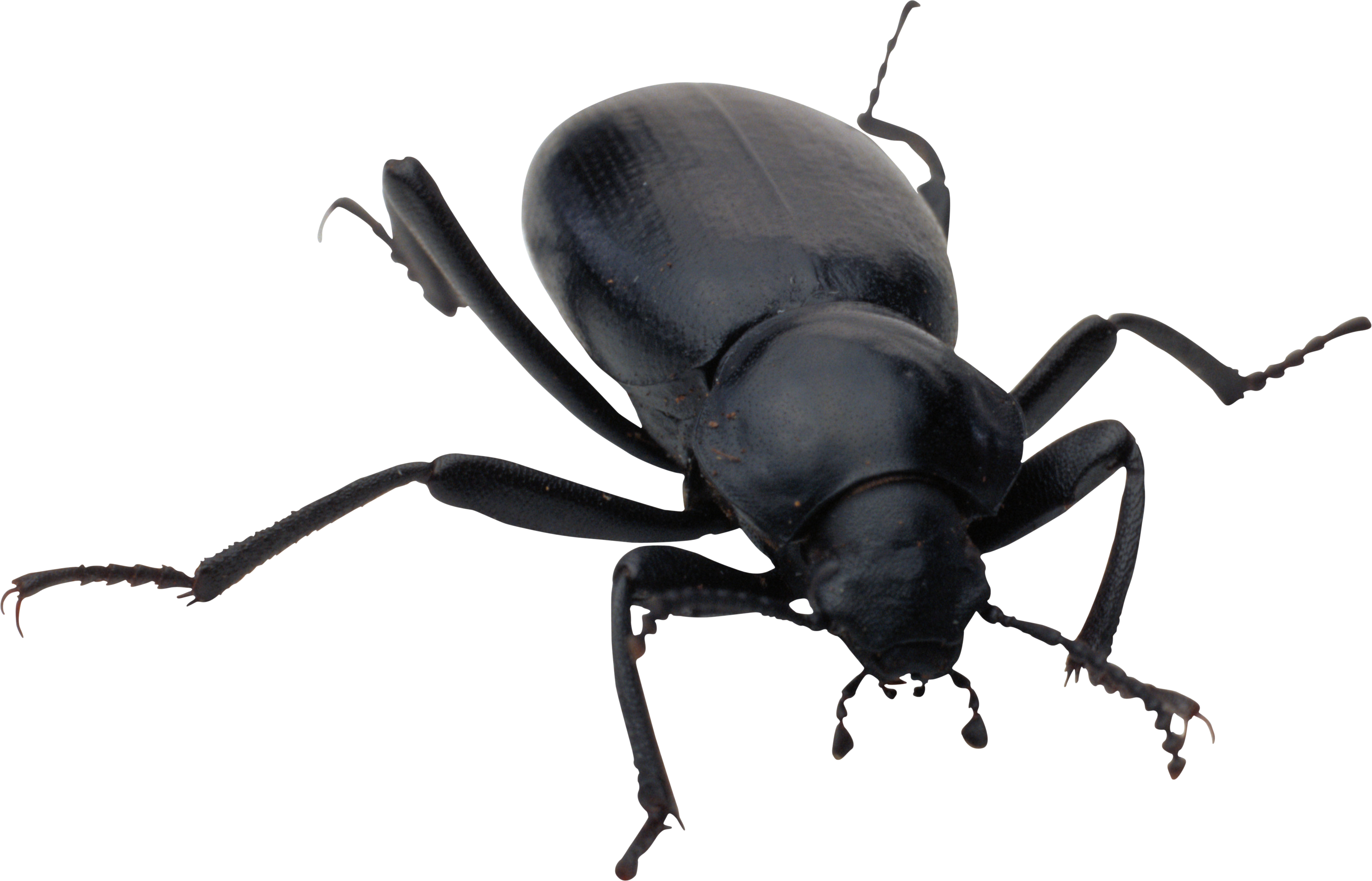 Bug HD PNG