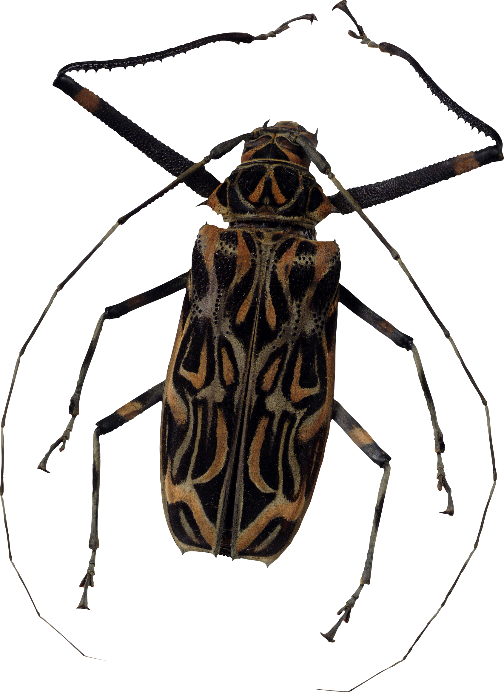 Bug Png Image - Bugs, Transparent background PNG HD thumbnail